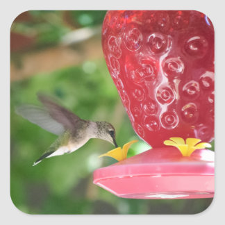 Hummingbird Sipping Square Sticker
