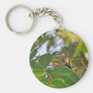 Hummingbird Sitting in a Privet Tree Basic Round Button Keychain
