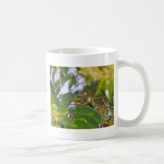 Hummingbird Sitting in a Privet Tree Classic White Coffee Mug