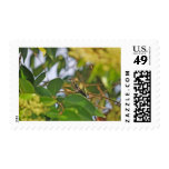 Hummingbird Sitting in a Privet Tree Postage