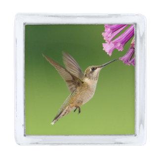 Hummingbird Spring