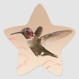 Hummingbird Star Stickers