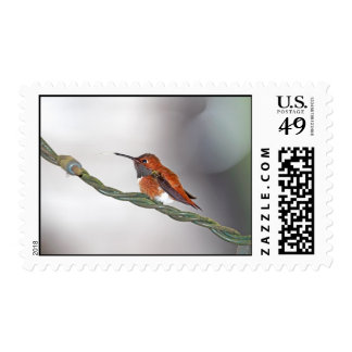 Hummingbird Sticking Out Tongue Postage