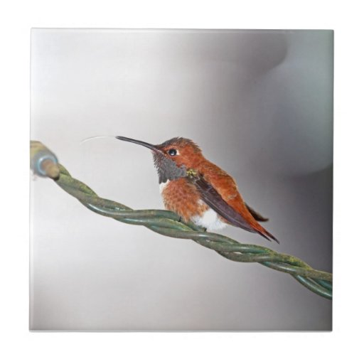 Hummingbird Sticking Out Tongue Small Square Tile