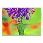 Hummingbird, Straight Up Cards