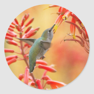 Hummingbird surrounded by red yucca classic round sticker