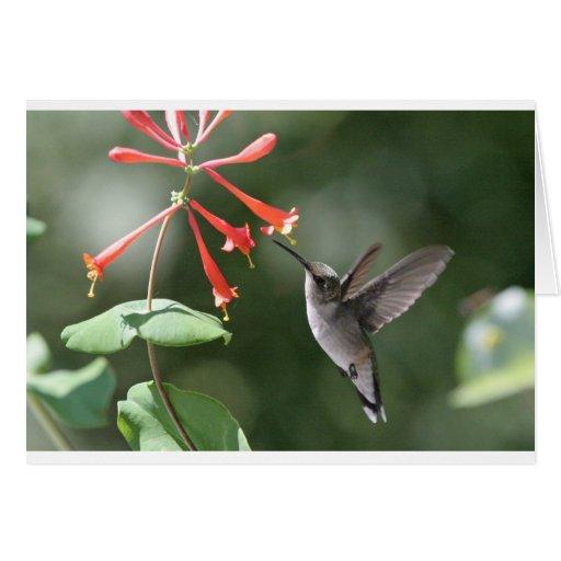 Hummingbird Treasures Cards