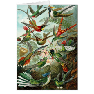 Hummingbird (Trochilidae) by Haeckel Card