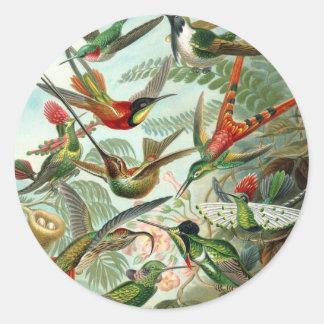 Hummingbird (Trochilidae) by Haeckel Round Sticker