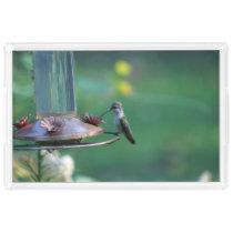 Hummingbird, Vanity Tray. Acrylic Tray