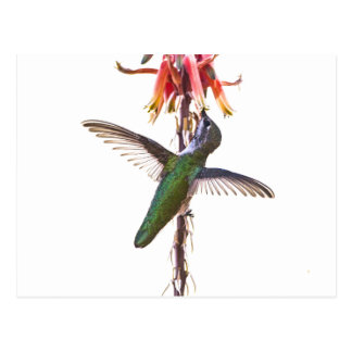Hummingbird wings postcard