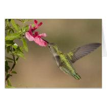 Hummingbirds 021 card
