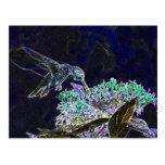 Hummingbirds 105a post cards