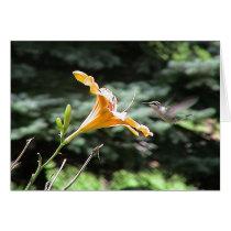 Hummingbirds 2005-0821