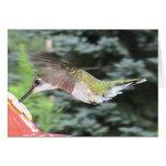 Hummingbirds 2005-0912 greeting card