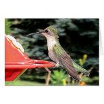 Hummingbirds 2005-0915 greeting card