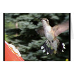 Hummingbirds 2005-0919 greeting card
