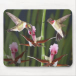 Hummingbirds and Blooms Mouse Pad