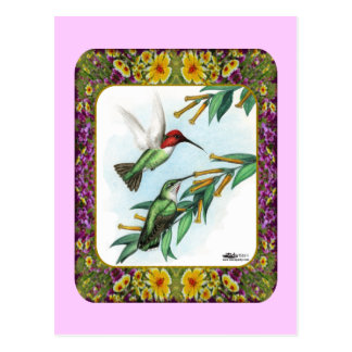 Hummingbirds and Flowers #4 Postcard