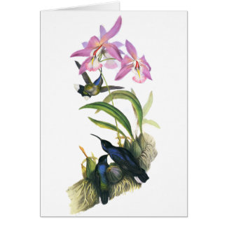Hummingbirds and Pink Orchids Card