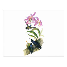 Hummingbirds and Pink Orchids Postcard