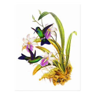 Hummingbirds and Purple Orchids Postcard