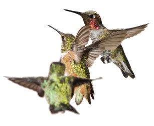Hummingbirds Bathroom Set