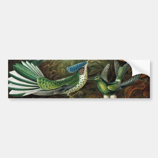 Hummingbirds Bumper Sticker