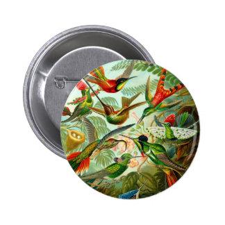 Hummingbirds Button
