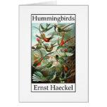Hummingbirds by Ernst Haeckel Greeting Card