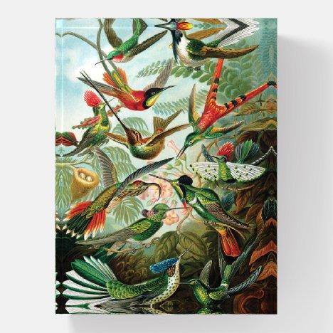 Hummingbirds by Ernst Haeckel Paperweight