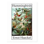 Hummingbirds by Ernst Haeckel Post Cards