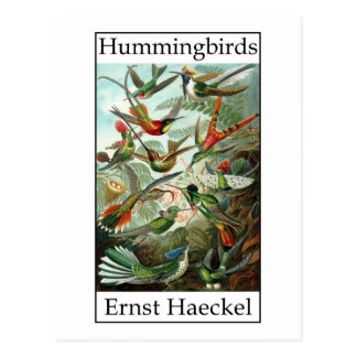 Hummingbirds by Ernst Haeckel Post Cards