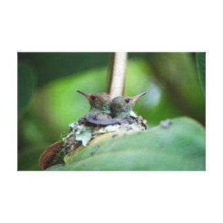 Hummingbirds Stretched Canvas Print