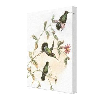 Hummingbirds Gallery Wrap Canvas