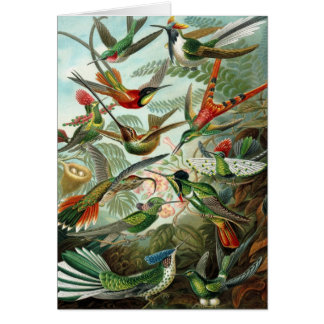 Hummingbirds - Ernst Haeckel Card