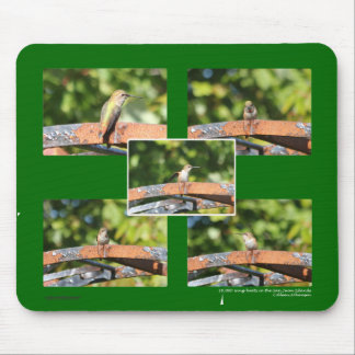 Hummingbirds: Female Hummingbird in a Bower Mouse Pad