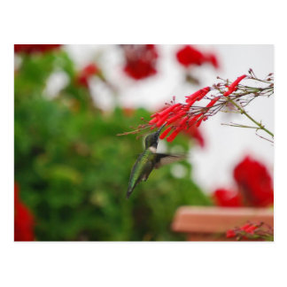 Hummingbird's Food Postcard