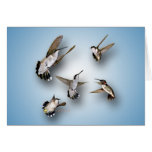 Hummingbirds Greeting Cards