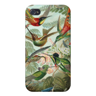 Hummingbirds Illustration Vintage Haeckel iPhone 4 Cover