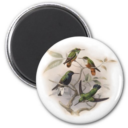 Hummingbirds  in Flight 2 Inch Round Magnet