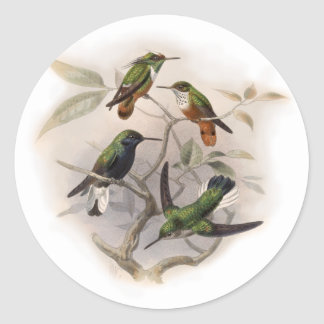 Hummingbirds  in Flight Classic Round Sticker