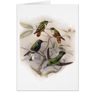 Hummingbirds In Flight - Customized Greeting Card