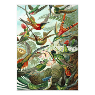 "Hummingbirds 5"" X 7"" Invitation Card"