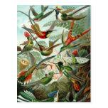 Hummingbirds Post Cards