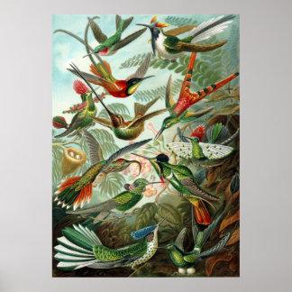 Hummingbirds Print