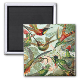 Hummingbirds Square Magnet