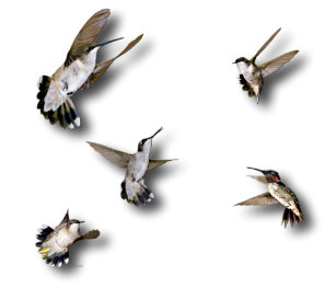 Hummingbird Hats   Caps  70027b04cded