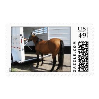 Humor animal del remolque del caballo - caminante  sellos