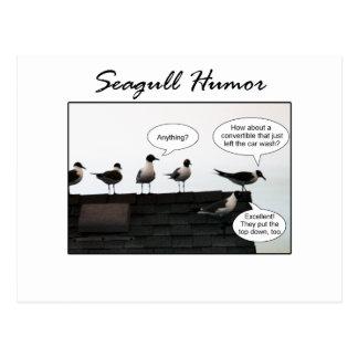 Humor de la gaviota tarjetas postales